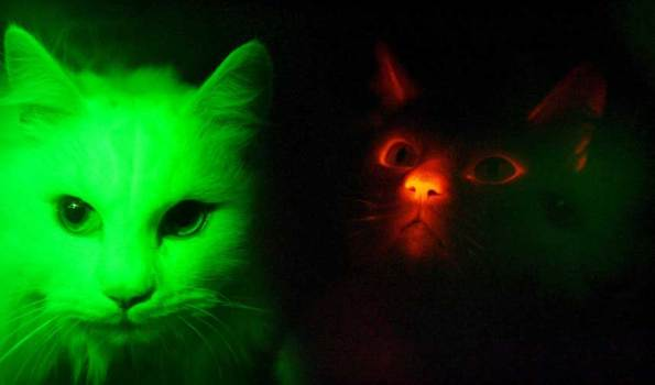 glow in the dark kitty