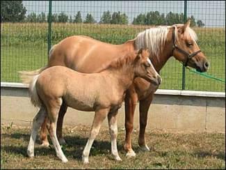 Prometea & Pegasus