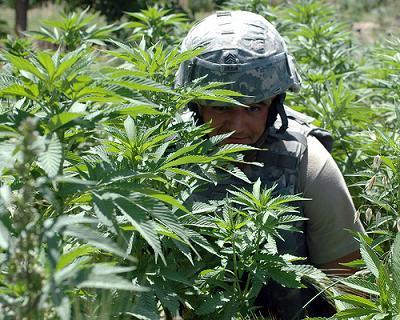 weed_crop
