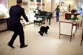 """President Barack Obama walks the family dog """"Bo"""" on a leash April 14, 2009, through the Private Residence at the White House"""